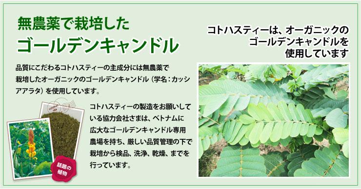 無農薬で栽培したゴールデンキャンドル